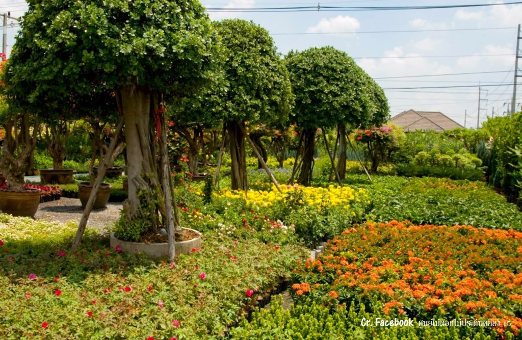 Decorative Plants Village at Rangsit Klong 15 (หมู่บ้านไม้ดอกไม้ประดับคลอง ๑๕)