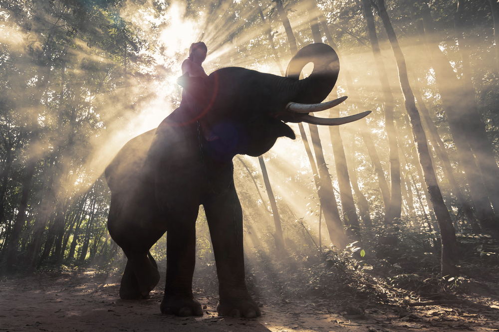 Surin – The City of Elephant in Thailand