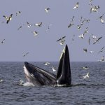 Whales in Thailand