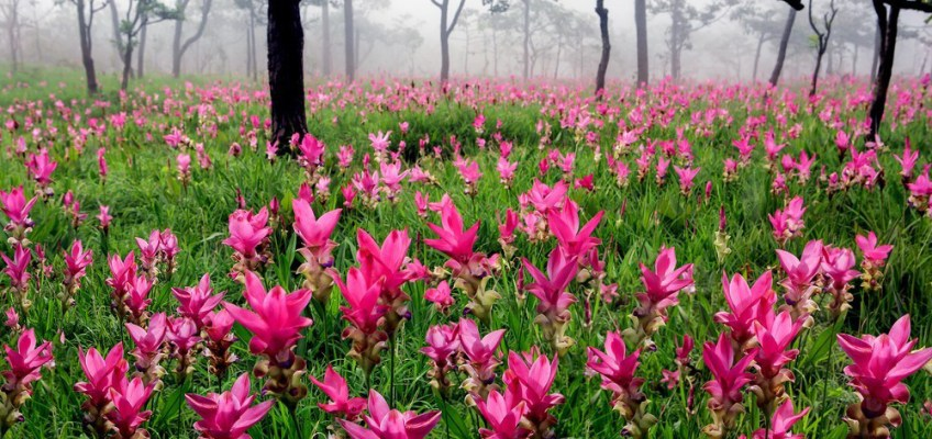 5 Places To See In Thailand In June Pa Hin Ngam National Park Siam Tulip