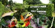 butterflysamui