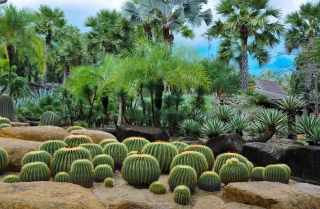 Тропический парк Нонг Нуч - Парк кактусов