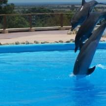 Зоопарк Фригия - дельфины