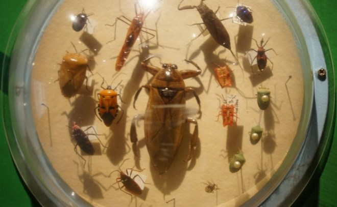 Бабочки и жуки в Таиланде