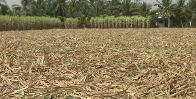 засуха во Вьетнаме