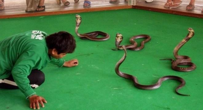 Змеиная ферма в Паттайе - что купить