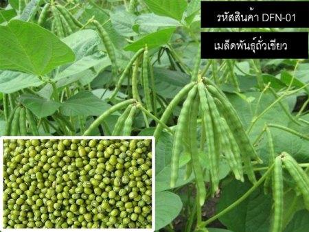 เมล็ดพันธุ์ถั่วเขียว