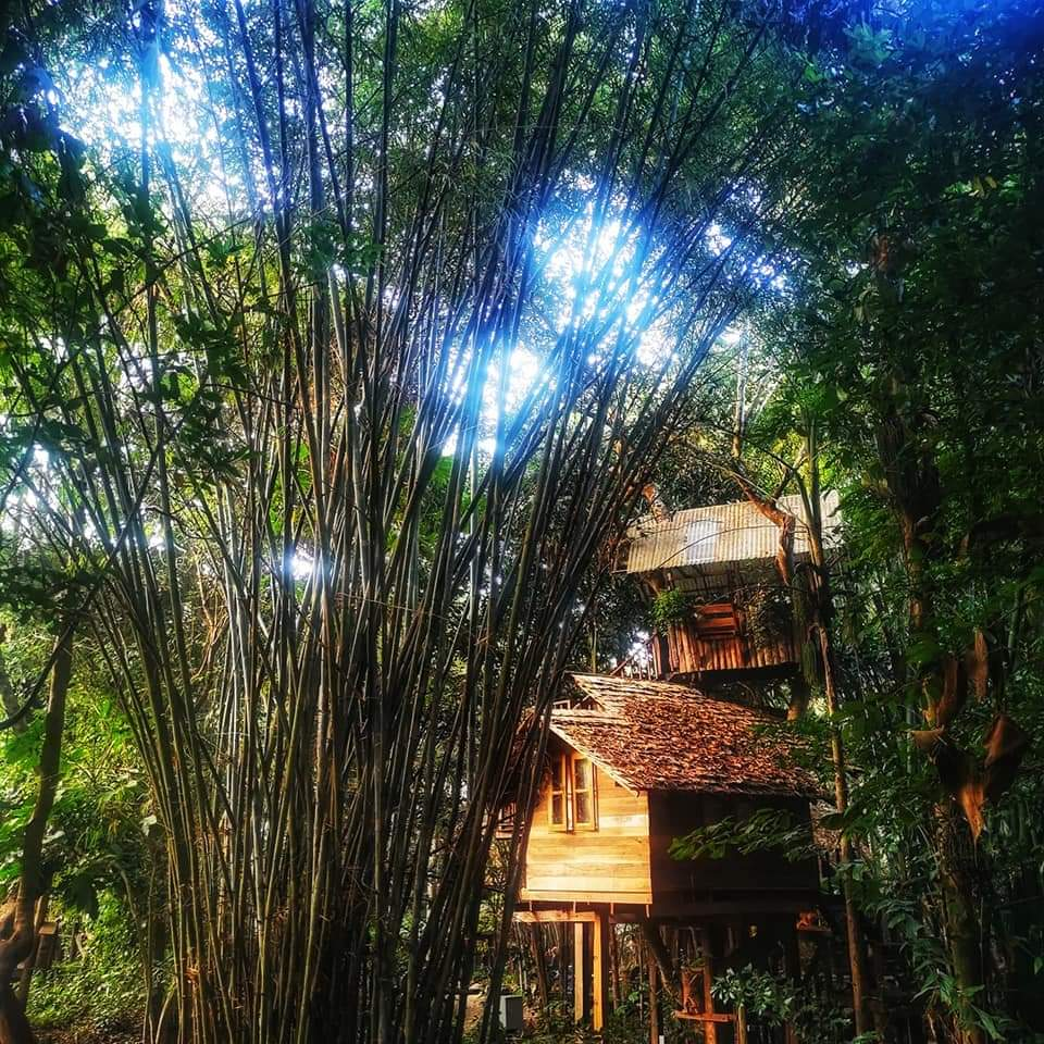 Treehouse resort of Rabaeng in the teak forest