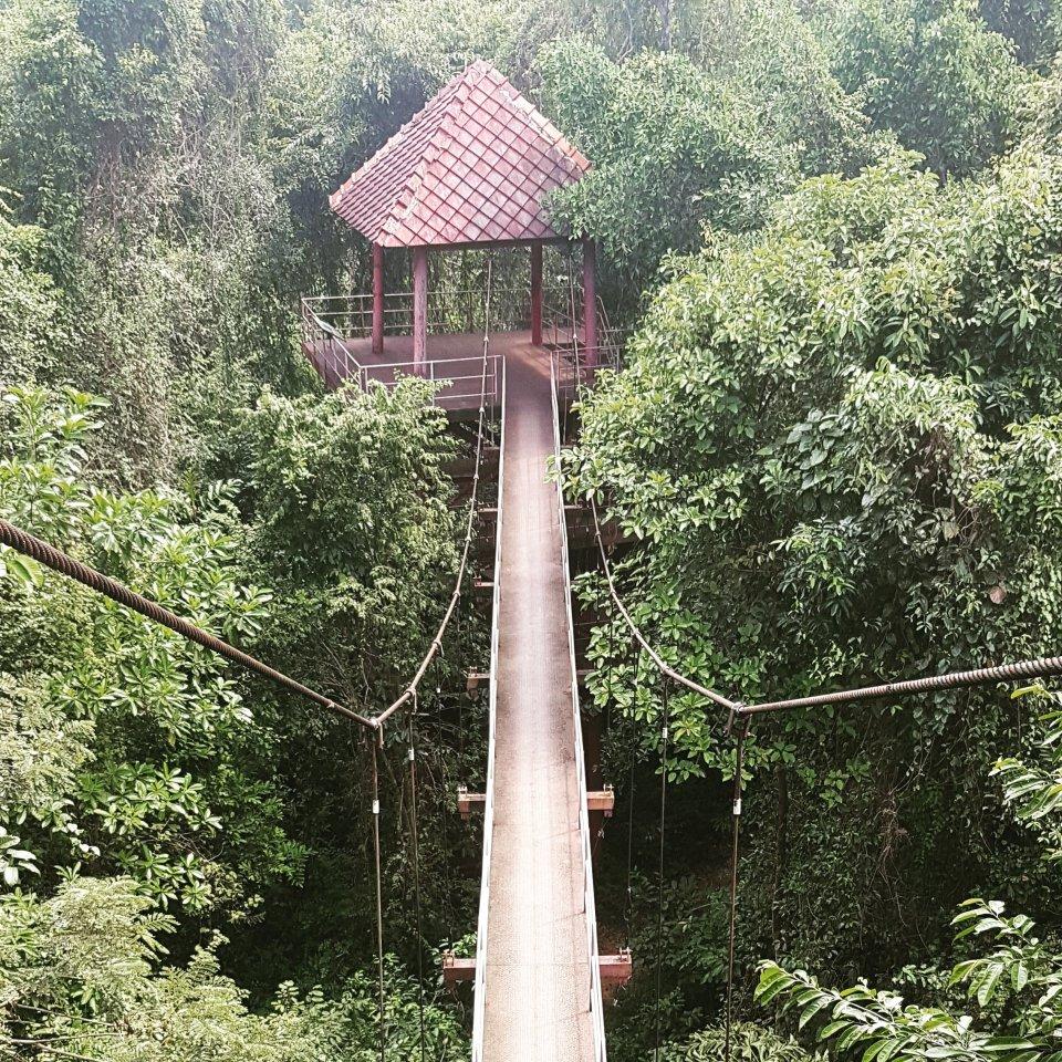 Canopy walk in Trang Botanical Garden