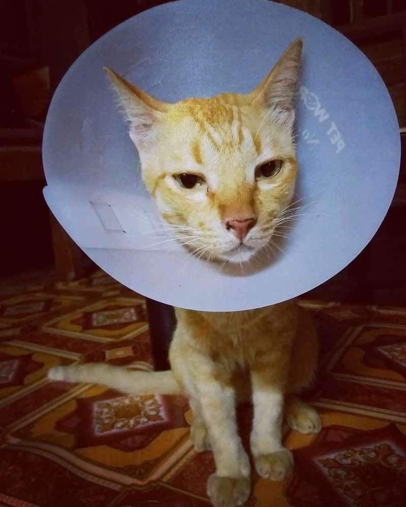 悲しそうな表情の猫