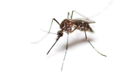 ยุงนิวซีแลนด์อาจแพร่เชื้อ Zika Virus ได้