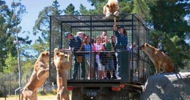 ประสบการณ์เร้าใจที่ Orana Wildlife Park, Christchurch