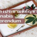 การลงประชามติกัญชา Cannabis Referendum