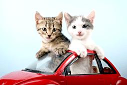 viagem-de-carro-com-seu-gato
