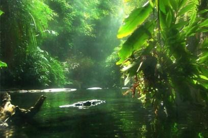 A Cura pelos Banhos de Floresta