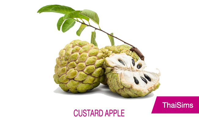 custard apple thailand thaisims