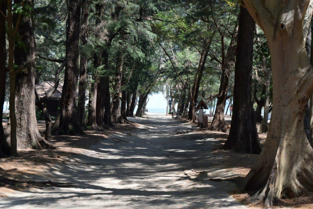 laem sala beach hua hin trees