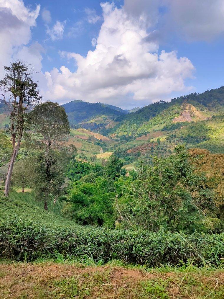 The Mae Salong loop: An easy Northern Thailand road trip 13