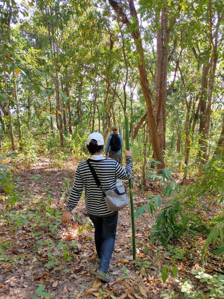The Mae Salong loop: An easy Northern Thailand road trip 2