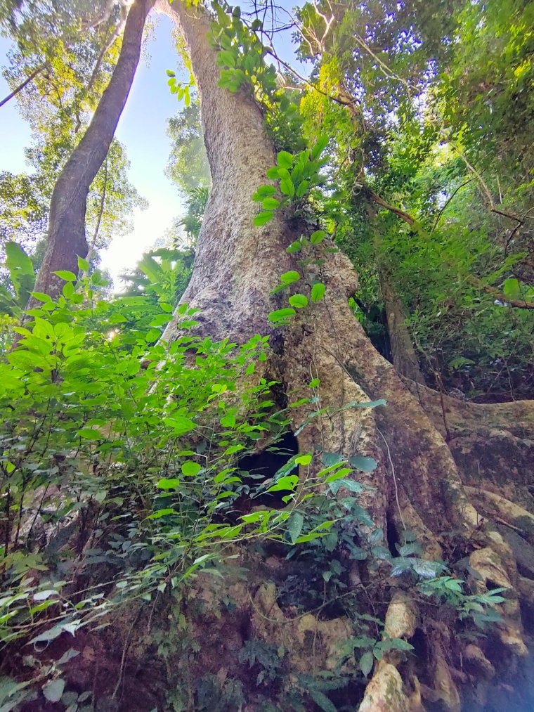 The Mae Salong loop: An easy Northern Thailand road trip 4