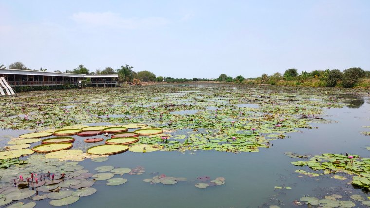 Red Lotus Floating Market: a vibrant day trip from Bangkok 1