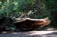A tree has fallen on the path.