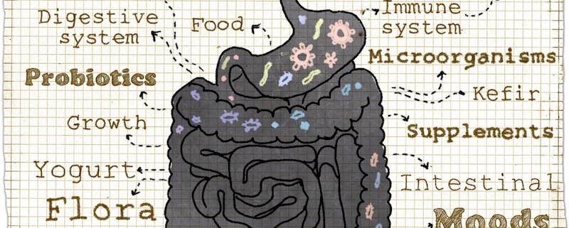 Ensymes & Probiotics