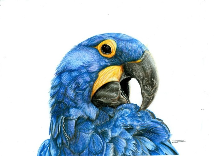 hyacinth_macaw_by_dliz3-d91bx69