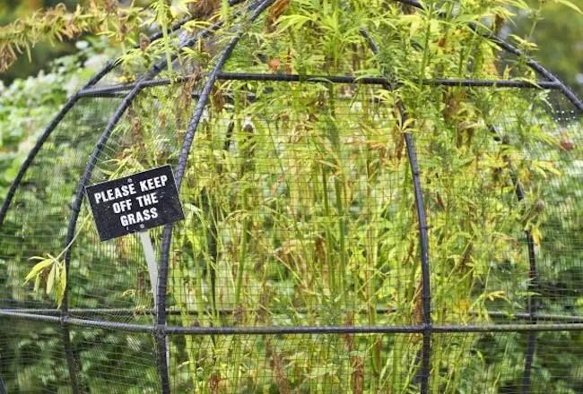 Alnwick-Poison-Garden0033647151368-650x440