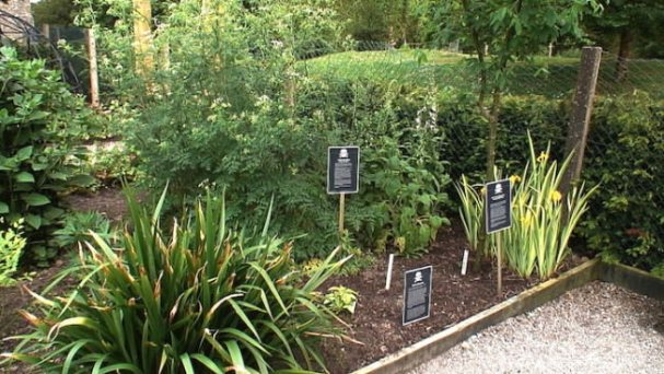 various-poison-plants-growing-in-the-poison-garden-blarney-castle-ireland-650x366