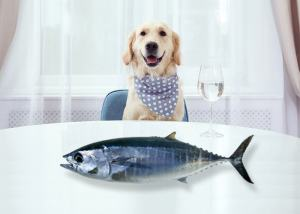 Can Dogs Eat Tuna Basic Information For Pet Owners 1 Can Dogs Eat Tuna?- Basic Information For Pet Owners