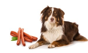 Can Dogs Eat Sausage