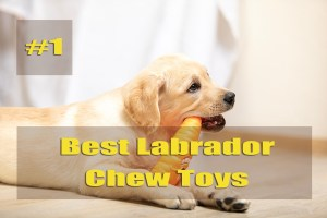 Best Labrador Chew Toys - Top Pick Reviewed