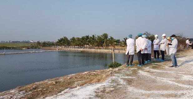 Hải Phòng tiêu hủy hơn 10.000 con vịt vì cúm A/H5N6