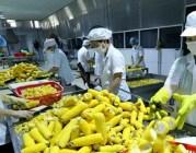 Quảng bá tiềm năng, thế mạnh xuất khẩu của nông sản, thực phẩm Việt