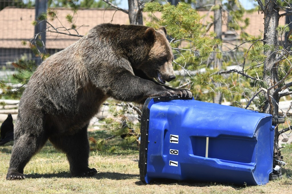 Momma bear fighting the smell of trash- Mom Sense
