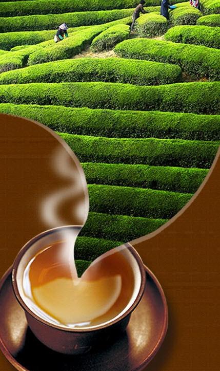 Ceai Puer sau Puerh Tea-Calitati-Cel mai bun pret in romania