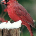 When the weather gets cold backyard birds need more than just bird seed....they need a water source and suet too!