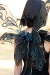 211-Fairy