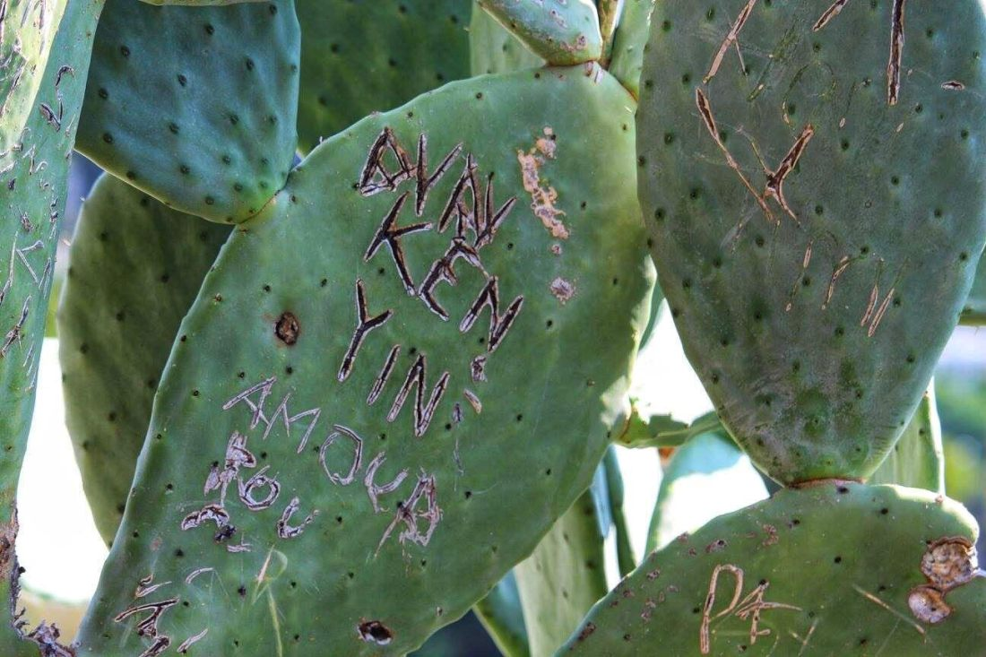 cactus graffiti capri