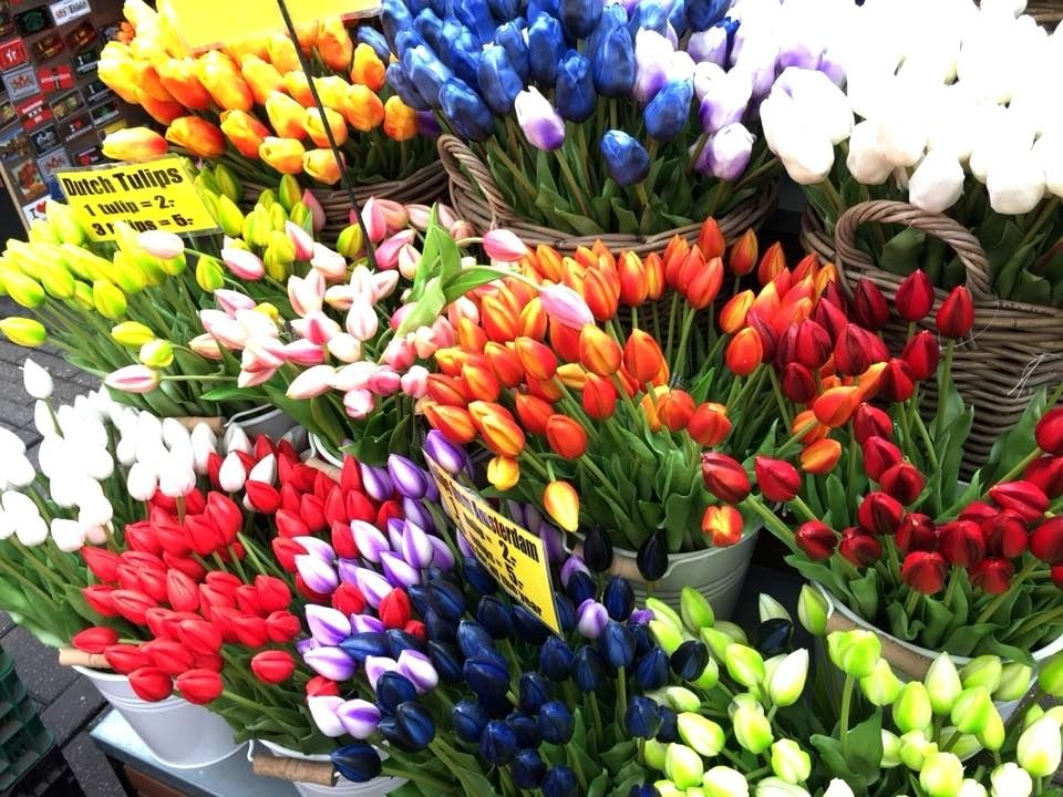 How Travel Is Helping My Anxiety - Amsterdam tulips