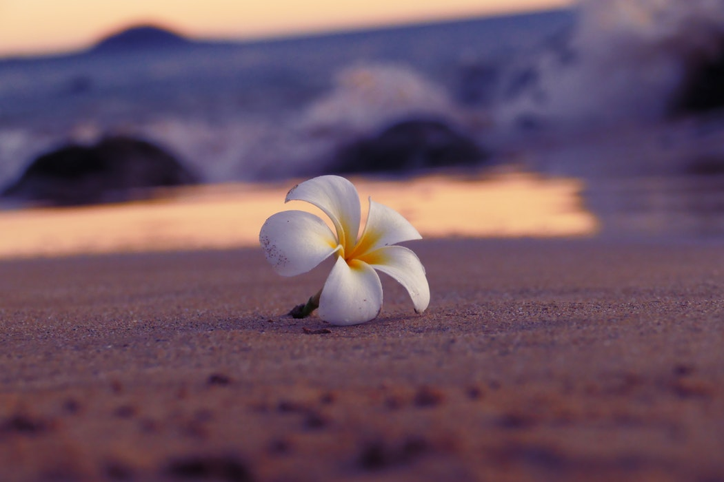 Hawaii Bucket List - Flower