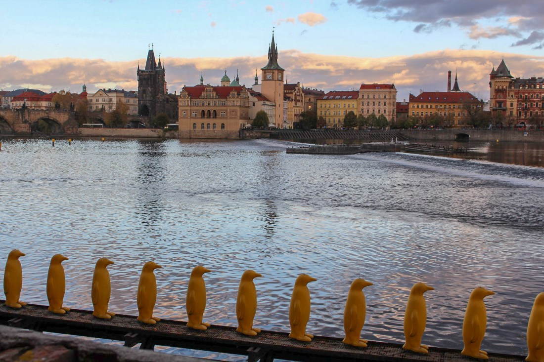 Plastic yellow penguins by the river, Prague