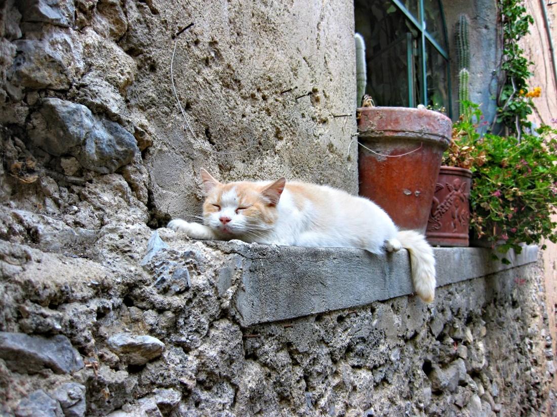 A cat sleeping on the window ledge of an Italian house