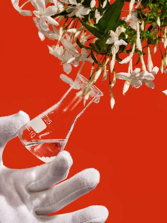 A gloved hand extracts essence from a spray of jasmine. This is a common ingredient when making a custom perfume in Paris
