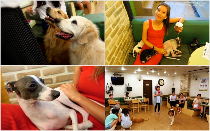 Bauhaus Dog Cafe - one of my favourite themed cafes in Seoul, Korea.