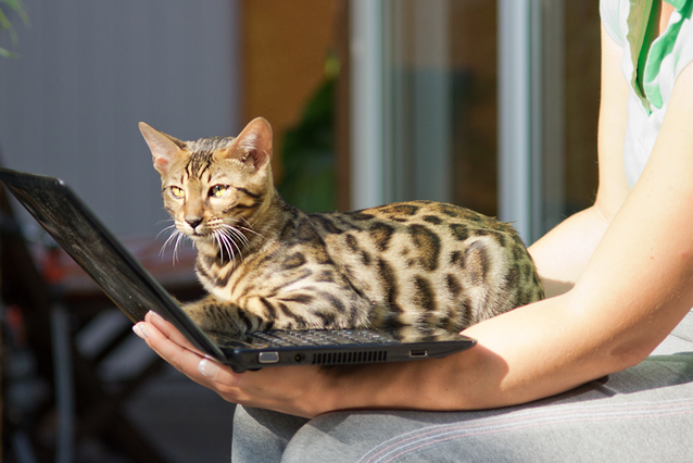 7 Things You MUST Know Before Owning A Bengal Cat