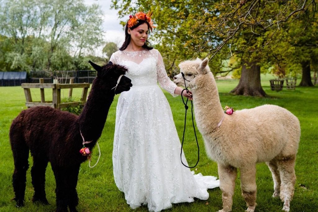 outdoor wedding bride with alpacas - field wedding - how to plan an outdoor wedding