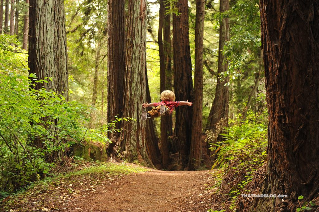 wil-can-fly-redwoods-blog