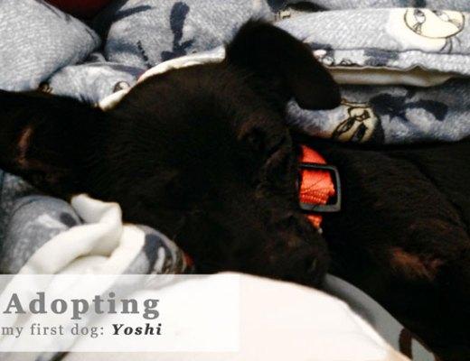Adopting-My-First-Dog-Yoshi